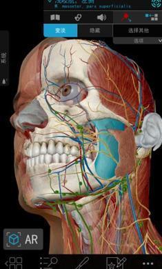 2020人体解剖学图谱