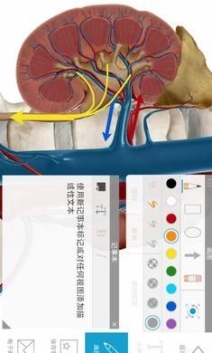 2020人体解剖学图谱游戏