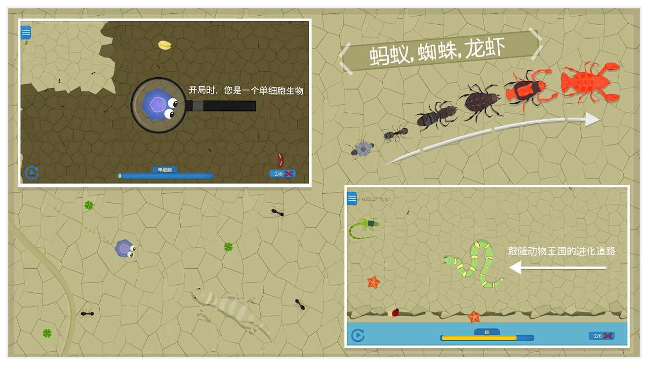 动物进化中文版